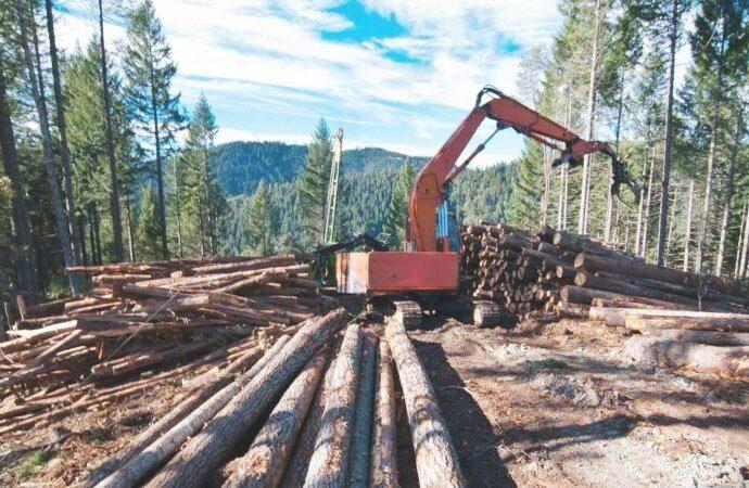 Imprese forestali, i Comuni verificano iscrizione all'albo dal sito della Regione